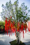 Δέντρο τύχης Στοκ Φωτογραφία