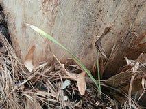 Δέντρο 0003 υποβάθρου Στοκ φωτογραφίες με δικαίωμα ελεύθερης χρήσης