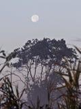 δέντρο φεγγαριών Στοκ Εικόνες