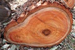 δέντρο φετών Στοκ φωτογραφία με δικαίωμα ελεύθερης χρήσης
