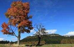 Δέντρο φθινοπώρου και νεκρό δέντρο με τους βράχους στην ανασκόπηση Στοκ εικόνα με δικαίωμα ελεύθερης χρήσης