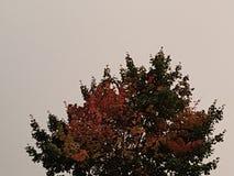 Δέντρο φθινοπώρου με τα κόκκινα φύλλα σε ένα υπόβαθρο του νεφελώδους ουρανού στοκ εικόνα με δικαίωμα ελεύθερης χρήσης