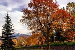 Δέντρο φθινοπώρου με τα κόκκινα φύλλα σε ένα υπόβαθρο των βουνών Στοκ Φωτογραφίες