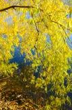 Δέντρο φθινοπώρου με την όμορφη φύση στη Νέα Ζηλανδία Στοκ εικόνα με δικαίωμα ελεύθερης χρήσης