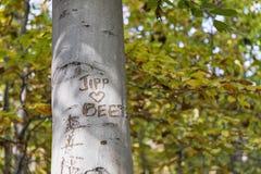 Δέντρο φθινοπώρου στο δάσος με τα γκράφιτι Στοκ Εικόνα