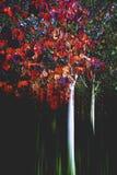 Δέντρο φθινοπώρου στο κόκκινο Στοκ Εικόνες