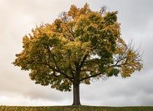 Δέντρο φθινοπώρου στο υπόβαθρο ουρανού Στοκ Φωτογραφία