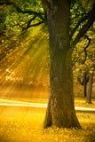 δέντρο φθινοπώρου Στοκ Φωτογραφίες