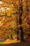 δέντρο φθινοπώρου onange Στοκ εικόνα με δικαίωμα ελεύθερης χρήσης