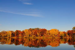 δέντρο φθινοπώρου scape Στοκ εικόνες με δικαίωμα ελεύθερης χρήσης