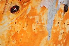 δέντρο φλοιών Στοκ φωτογραφία με δικαίωμα ελεύθερης χρήσης