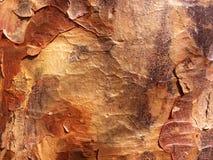 δέντρο φλοιών Στοκ εικόνα με δικαίωμα ελεύθερης χρήσης