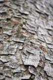 δέντρο φλοιών Στοκ εικόνες με δικαίωμα ελεύθερης χρήσης