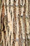 δέντρο φλοιών Στοκ φωτογραφίες με δικαίωμα ελεύθερης χρήσης