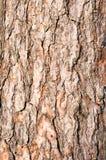 δέντρο φλοιών Στοκ Φωτογραφία