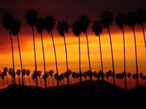 δέντρο φοινικών sunst Στοκ Φωτογραφίες