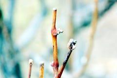 Δέντρο φρούτων ` s το χειμώνα Στοκ Φωτογραφίες