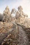 δέντρο φυλάκων Στοκ Φωτογραφία