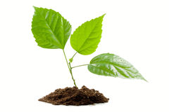 δέντρο φυτεύσιμου φυταρί& Στοκ Εικόνες