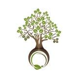 Δέντρο φυλλώδες Στοκ Φωτογραφίες