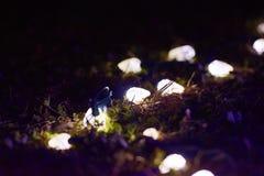 Δέντρο φω'των Χαρούμενα Χριστούγεννας Στοκ Εικόνες
