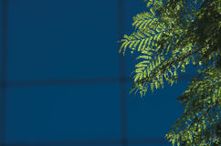 δέντρο φύλλων γυαλιού οικοδόμησης ανασκόπησης Στοκ εικόνα με δικαίωμα ελεύθερης χρήσης