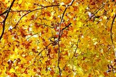 δέντρο φύλλων φθινοπώρου Θερμή ημέρα φθινοπώρου Στοκ φωτογραφία με δικαίωμα ελεύθερης χρήσης