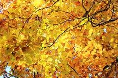 δέντρο φύλλων φθινοπώρου Θερμή ημέρα φθινοπώρου Στοκ Εικόνες