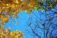 δέντρο φύλλων φθινοπώρου Θερμή ημέρα φθινοπώρου Στοκ φωτογραφίες με δικαίωμα ελεύθερης χρήσης