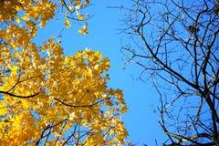 δέντρο φύλλων φθινοπώρου Θερμή ημέρα φθινοπώρου Στοκ Φωτογραφίες