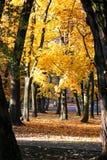 δέντρο φύλλων φθινοπώρου Θερμή ημέρα φθινοπώρου Στοκ εικόνες με δικαίωμα ελεύθερης χρήσης