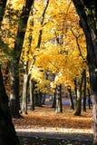 δέντρο φύλλων φθινοπώρου Θερμή ημέρα φθινοπώρου Στοκ Φωτογραφία