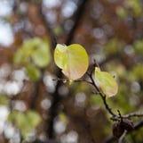 δέντρο φύλλων φθινοπώρου Στοκ φωτογραφία με δικαίωμα ελεύθερης χρήσης