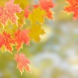 δέντρο φύλλων φθινοπώρου Στοκ Φωτογραφίες