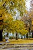 δέντρο φύλλων φθινοπώρου &ka Στοκ φωτογραφίες με δικαίωμα ελεύθερης χρήσης