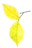 δέντρο φύλλων φθινοπώρου &kap Στοκ Φωτογραφίες