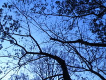δέντρο φύσης στοκ φωτογραφίες