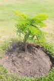 Δέντρο φύσης Στοκ εικόνα με δικαίωμα ελεύθερης χρήσης