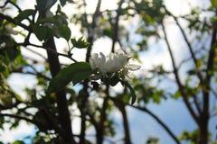 Δέντρο, φύση, άνοιξη, φύλλα, πουλί, λουλούδι, κλάδος, λευκό, πράσινο, άνθος, άνθιση, υπαίθρια, ζώο, πουλιά, φύλλο, ουρανός, κλάδο Στοκ Εικόνες