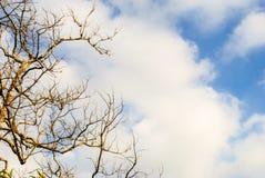 Δέντρο φύλλων υπόστεγων ενάντια στο νεφελώδη ουρανό Στοκ εικόνα με δικαίωμα ελεύθερης χρήσης