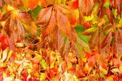Δέντρο φύλλων φθινοπώρου ως υπόβαθρο Στοκ Εικόνες