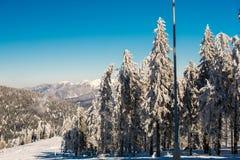 Δέντρο χειμερινού χιονιού Στοκ φωτογραφία με δικαίωμα ελεύθερης χρήσης