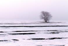 Δέντρο χειμερινών τοπίων Στοκ εικόνες με δικαίωμα ελεύθερης χρήσης