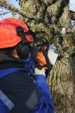 δέντρο χειρούργων ενέργε&iot Στοκ φωτογραφίες με δικαίωμα ελεύθερης χρήσης