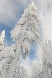 δέντρο χιονιού φαντασμάτων Στοκ φωτογραφία με δικαίωμα ελεύθερης χρήσης