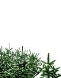 δέντρο χιονιού Χριστουγέ&nu Στοκ Εικόνες