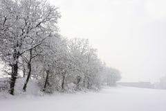 δέντρο χιονιού Στοκ εικόνες με δικαίωμα ελεύθερης χρήσης