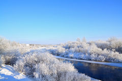 δέντρο χιονιού Στοκ φωτογραφία με δικαίωμα ελεύθερης χρήσης