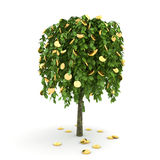 δέντρο χρημάτων Στοκ Εικόνες