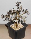 Δέντρο χρημάτων, Yin Yang αναμνηστικό στοκ εικόνα